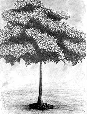 Tree with leaves drawing