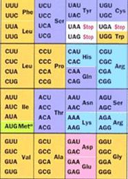 properties of genetic code